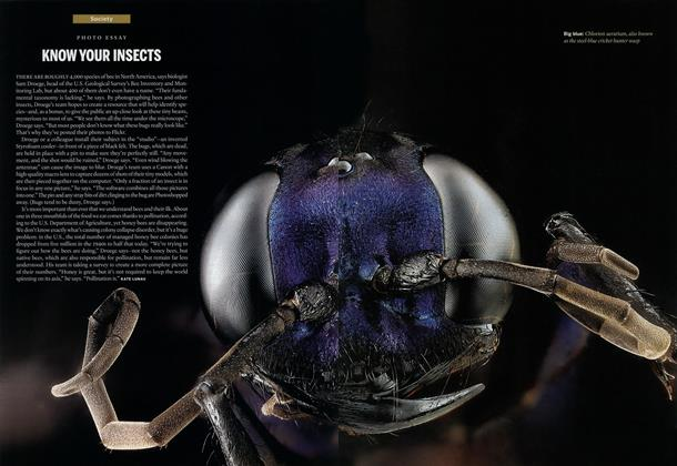 Article Preview: KNOW YOUR INSECTS, October 2013 | Maclean's
