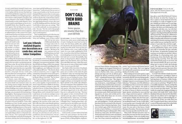 Article Preview: DON'T CALL THEM BIRD BRAINS, April 2014 | Maclean's