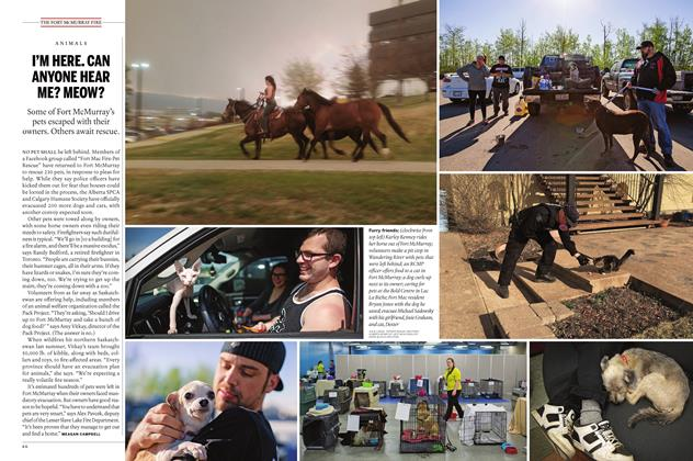 Article Preview: I'M HERE. CAN ANYONE HEAR ME? MEOW?, May 30 2016 | Maclean's