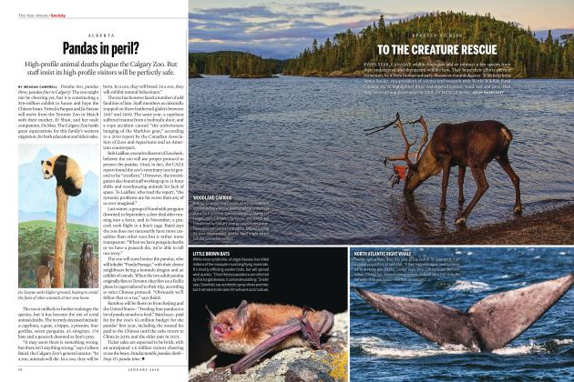 Article Preview: TO THE CREATURE RESCUE, JANUARY 2018 | Maclean's