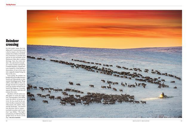 Article Preview: Reindeer crossing, MARCH 2018 | Maclean's