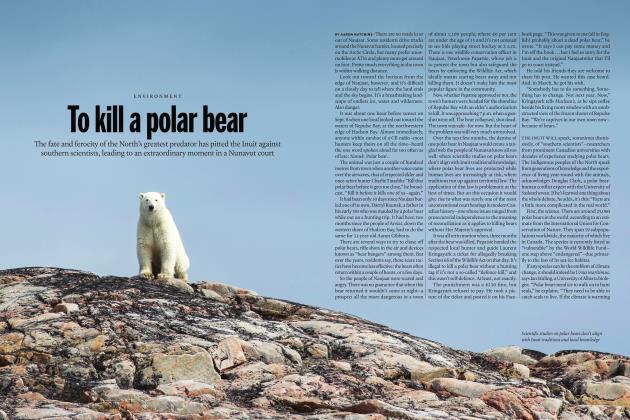 Article Preview: To kill a polar bear, MAY 2019 | Maclean's
