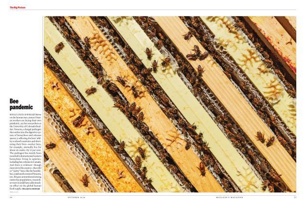 Article Preview: Bee pandemic, OCTOBER 2020   Maclean's