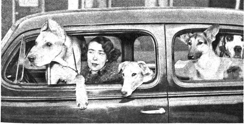 The World's First Dog Psychiatrist, Page:  - JUNE 11 1955 | Maclean's