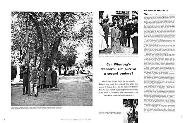 Can Winnipeg's wonderful elm survive a second century?